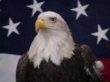 copyrighted Freedom Benefits logo image of bald eagle with American flag